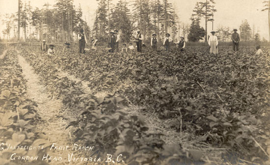 First Nations Strawberry Pickers