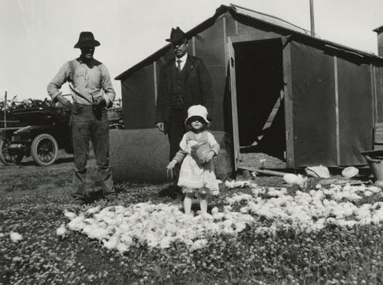 Vantreights Feeding Chicks