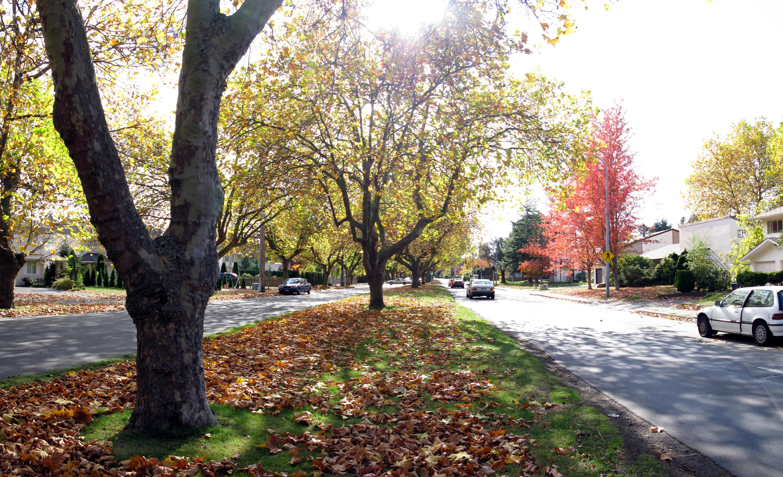 Shelbourne Street Memorial Trees