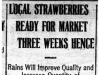 """Local Strawberries Ready for Market Three Weeks Hence"""