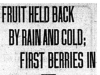 """Fruit Held Back By Rain and Cold: First Berries In"""